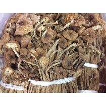 茶樹菇(300g)